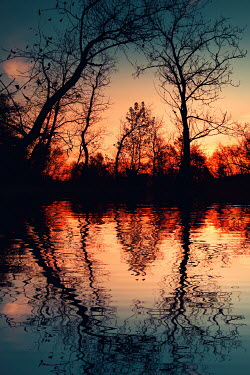 Magdalena Russocka silhouettes of trees reflected in water at sunset