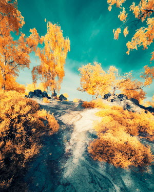 David Keochkerian EMPTY COUNTRY PATH WITH GOLDEN FOLIAGE Paths/Tracks