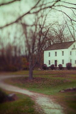 Lisa Bonowicz Trees and house