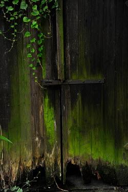 Ute Klaphake Moss on broken wooden barn door