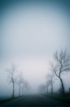 Carmen Spitznagel Bare trees and road under fog