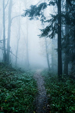 Carmen Spitznagel Path through forest under fog