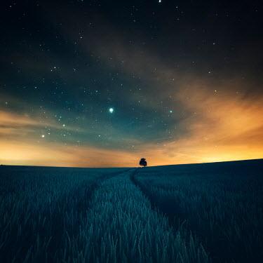 David Keochkerian Field under sunset sky