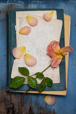 Alison Archinuk Wilted rose and petals torn book pages and old book