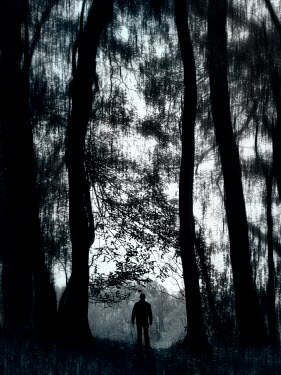 Trevor Payne SILHOUETTED MAN STANDING IN FOREST Men
