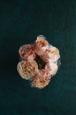 Cristina Mitchell PINK ROSES WRAPPED IN PLASTIC Flowers