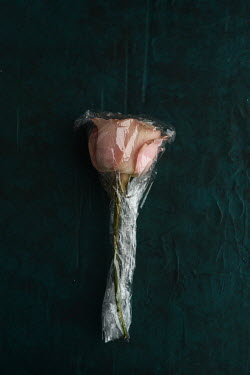 Cristina Mitchell PINK ROSE WRAPPED IN PLASTIC Flowers