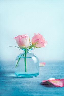 Magdalena Wasiczek TWO PINK ROSES IN GLASS VASE Flowers