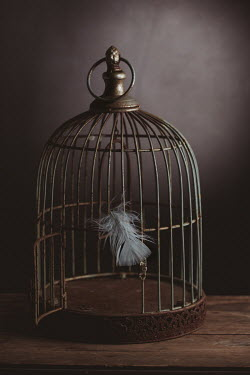 Magdalena Wasiczek OPEN METAL BIRDCAGE WITH WHITE FEATHER Miscellaneous Objects