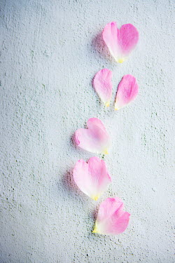 Isabelle Lafrance LINE OF PINK HEART-SHAPED PETALS Flowers