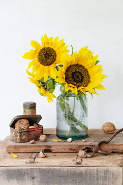 Magdalena Wasiczek SUNFLOWERS WITH TIN OF NUTS AND NUTCRACKER Flowers
