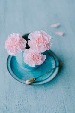 Magdalena Wasiczek THREE PINK CARNATIONS IN BLUE CUP Flowers
