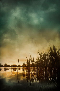 Silas Manhood RIVER REEDS AT SUNSET