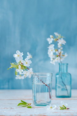 Magdalena Wasiczek WHITE BLOSSOM IN GLASS AND BOTTLE ON TABLE Flowers