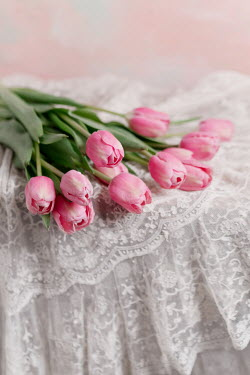 Magdalena Wasiczek PINK TULIPS ON WHITE LACE Flowers