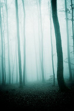 Carmen Spitznagel EMPTY FOGGY FOREST Trees/Forest