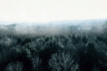 Isabelle Lafrance FOGGY LANDSCAPE WITH TREES Trees/Forest