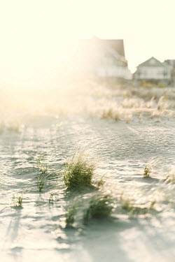 Lisa Bonowicz SUNLIT SANDY BEACH WITH HOUSES Houses