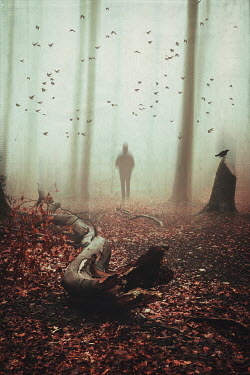 Dirk Wustenhagen Man and flying birds in foggy forest