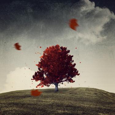 Dirk Wustenhagen Maple tree on windy hill