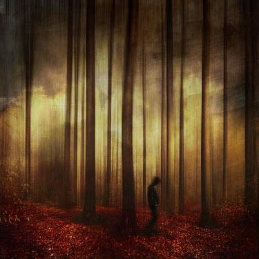 Dirk Wustenhagen Silhouette of man walking in autumn forest