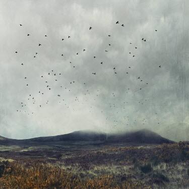 Dirk Wustenhagen Flock of birds flying over mountain and field