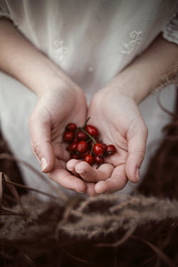 Elisabeth Mochner Hands of woman holding red berries