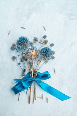 Magdalena Wasiczek Blue flowers with blue ribbon