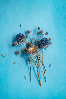 Magdalena Wasiczek Blue flowers on blue background