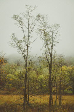 Susan O'Connor Trees in forest under fog
