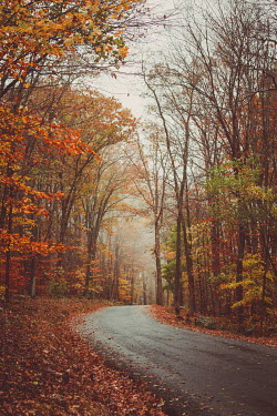 Susan O'Connor Road through autumn forest