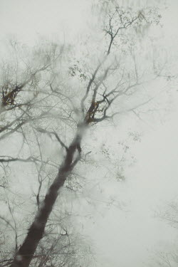 Susan O'Connor Bare tree from below in rain