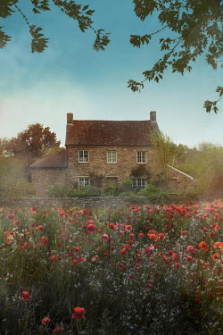 Ildiko Neer Farmhouse by poppy field