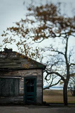 Lisa Bonowicz Abandoned shack and tree