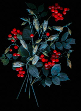 Magdalena Wasiczek Flowers and red berries on black background