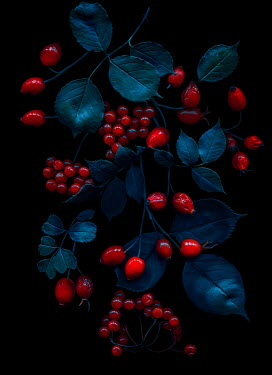 Magdalena Wasiczek Leaves and red berries in shadow