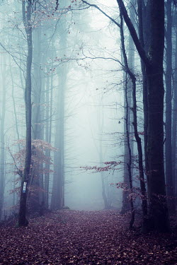 Carmen Spitznagel EMPTY PATH IN FOGGY FOREST Paths/Tracks