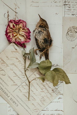 Matilda Delves SMALL DEAD BIRD LYING ON LETTERS WITH FLOWER Birds