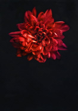 Lyn Randle CLOSE UP OF RED FLOWER Flowers