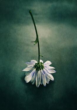 Lyn Randle WHITE FLOWER UPSIDE DOWN Flowers
