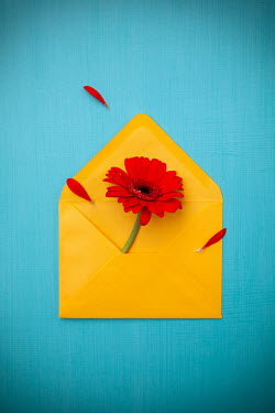 Miguel Sobreira RED FLOWERS AND PETALS IN YELLOW ENVELOPE Flowers