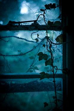 Natasza Fiedotjew ivy growing on broken window of abandoned house