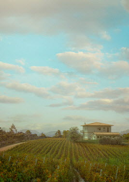 Drunaa HOUSE WITH VINEYARDS IN SUMMER Houses