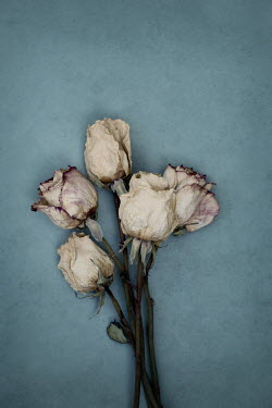 Jaime Brandel BUNCH OF DRIED ROSES Flowers