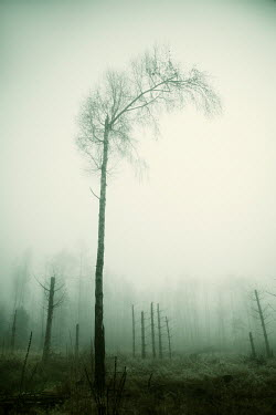Carmen Spitznagel WINTRY TREES IN FOGGY COUNTRYSIDE Trees/Forest