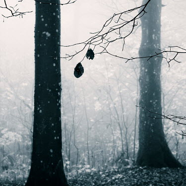 Carmen Spitznagel WINTRY TREES AND BRANCHES IN FOG Trees/Forest