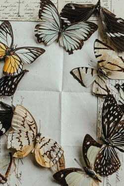 Matilda Delves Dead butterflies on letter