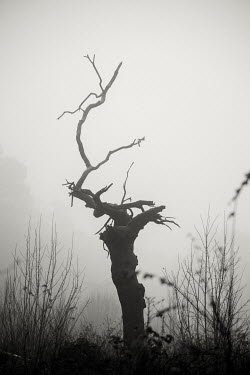 Rekha Garton Dead tree in fog