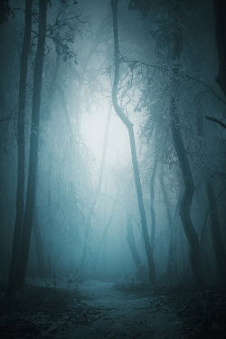 Ildiko Neer COUNTRY PATH WITH TREES AND FOG Paths/Tracks