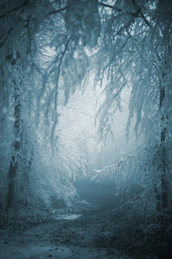 Ildiko Neer Path through wintry forest
